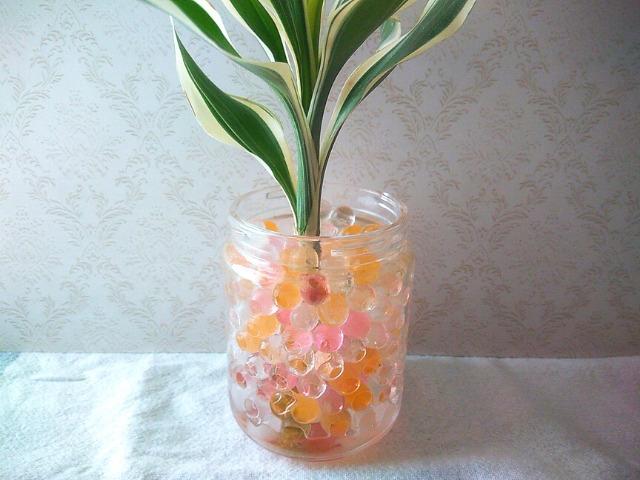 チャーミークリア観葉植物